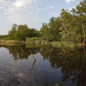 oasi e parchi aperti 2013